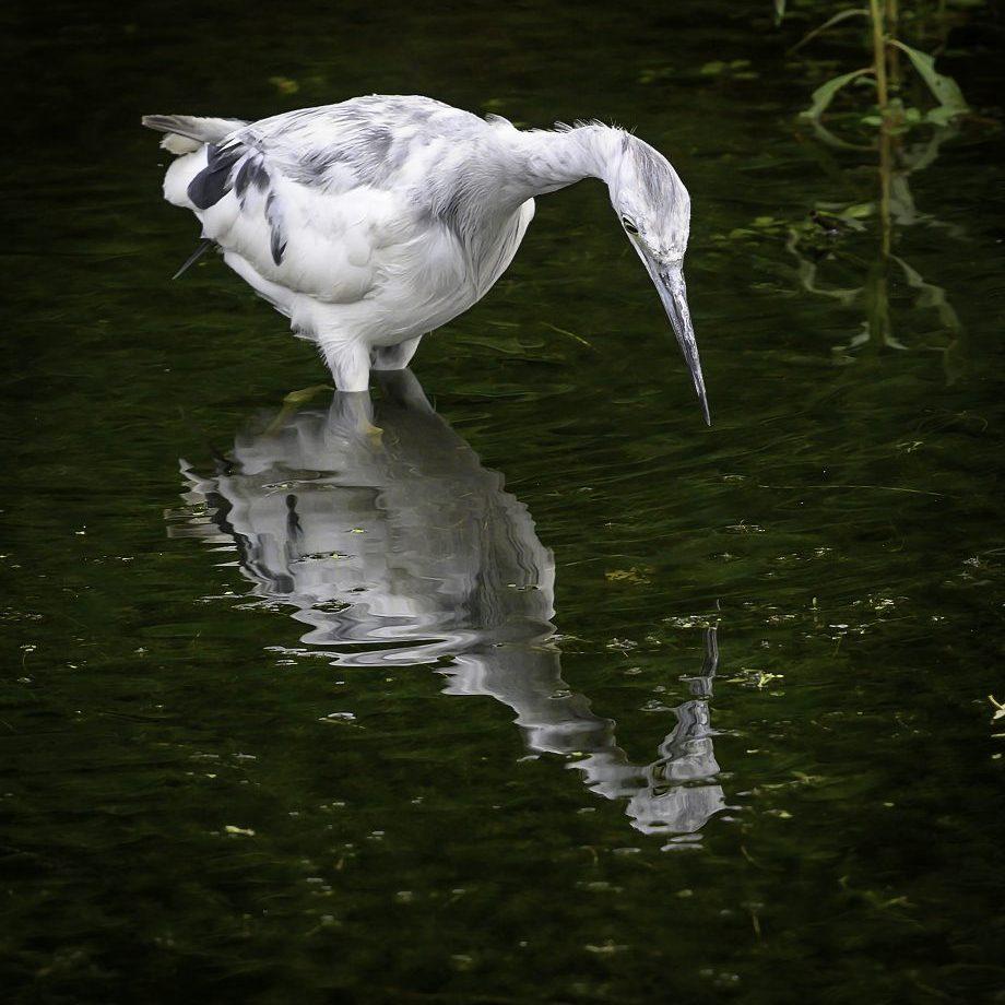 egret mirror